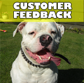 buddys_customer_feedback