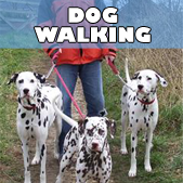 buddys_dog_walking