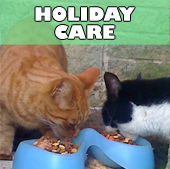 buddys_holiday_care
