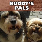 buddys_pals